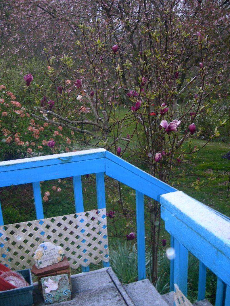 Back Porch April 6