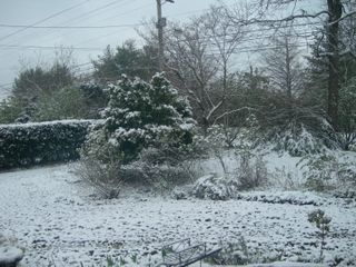 Snow on Boxwood April 7