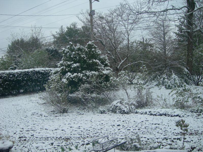 Snow on Boxwood April 7