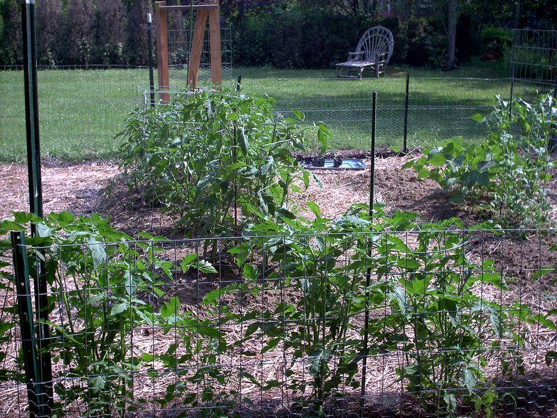 Garden 605