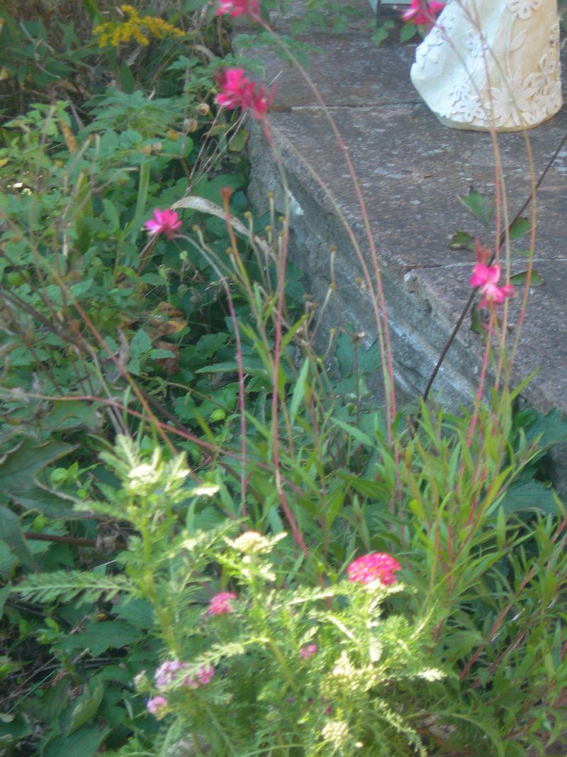 Fall Flowers Smaller Pot