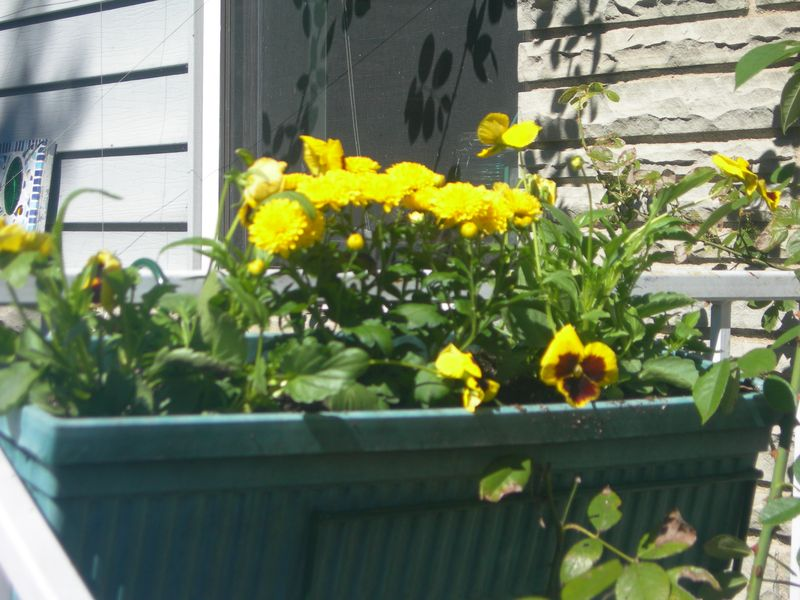 Window Box Oct.