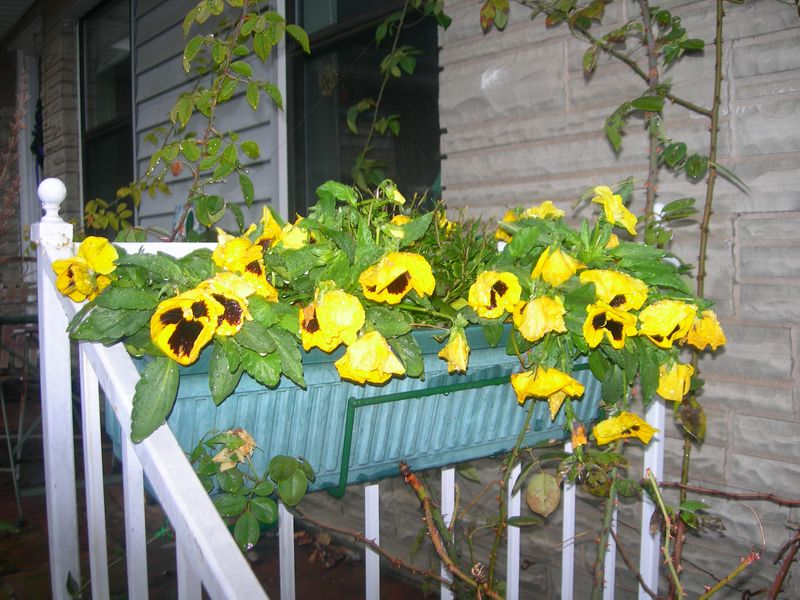 Window Box November