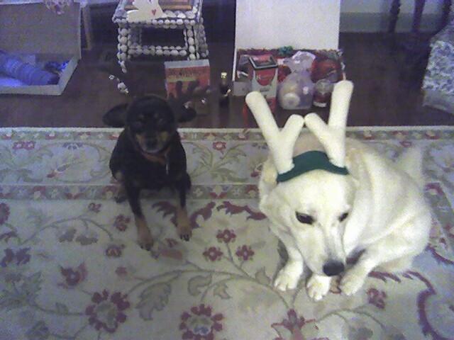 DogsAntlers122506