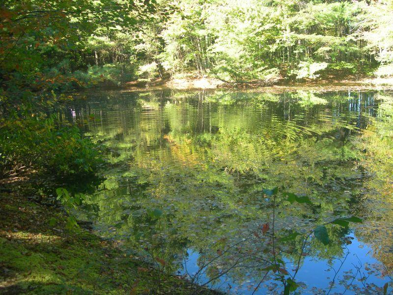 Pond 10-02-11
