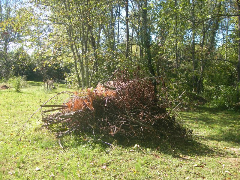 My Brush Pile 10-02-11