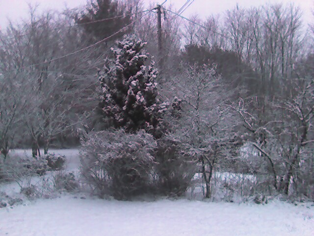 Snow_front_yard